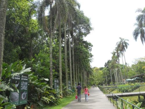 Jardim Botânico lugar tranquilo para passear com as crianças   Divulgação