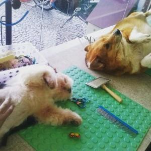 Mon Pet Chou (Foto: Divulgação)