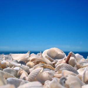 Shell Beach, praia de conchas (Foto: Divulgação)