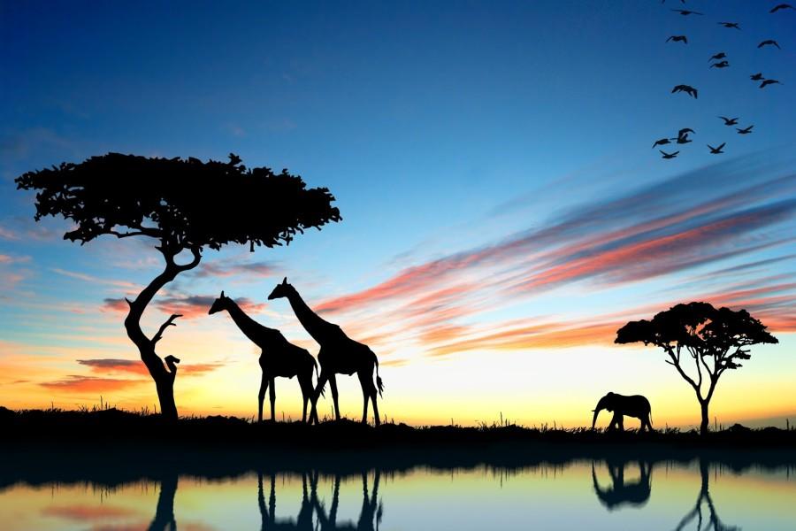 áfrica do sul (foto: divulgação)