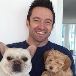 Hugh Jacmann e seus pets (Foto: Divulgação)