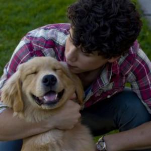 Nick Jonas e seu pet (Foto: Divulgação)