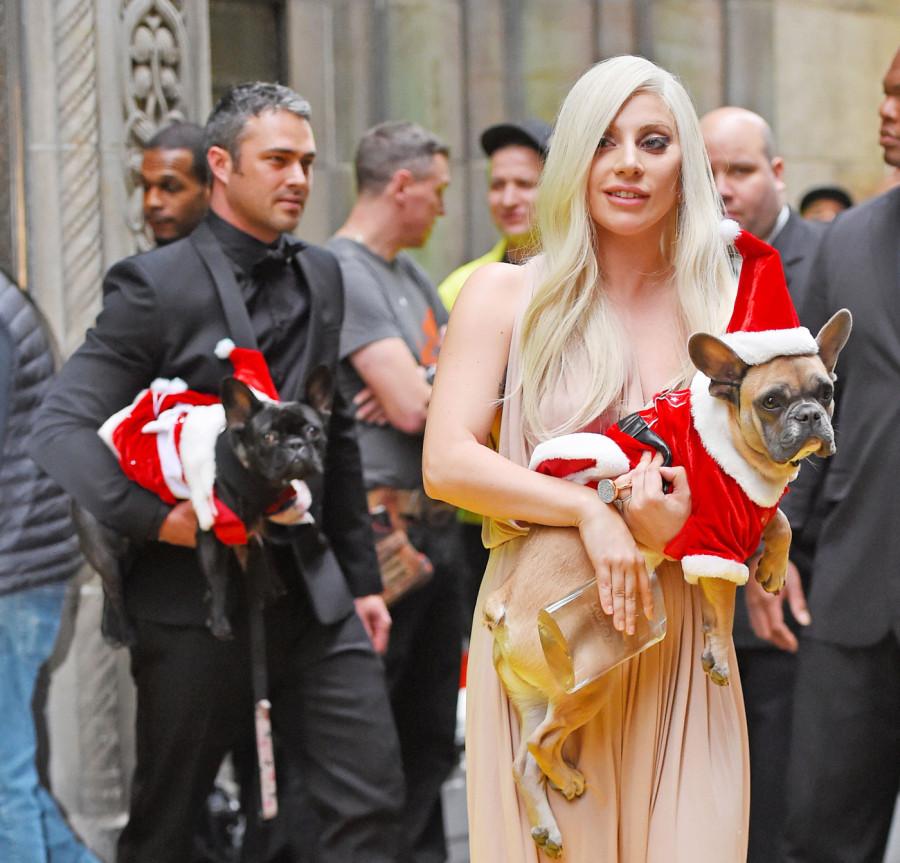Taylor Kinney e Lady Gaga com seus pets, Miss Asia e Koji (Foto: Divulgação)