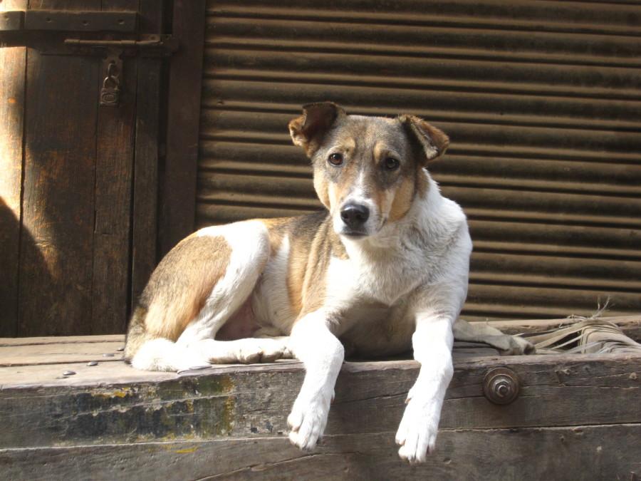 Cães que vivem na rua não recebem os cuidados necessários (Foto: Divulgação)