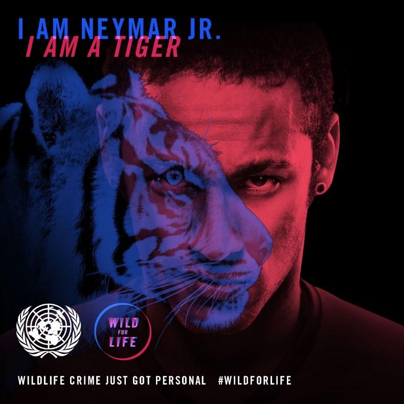 O animal que mais se parece com Neymar é o tigre (Foto: Reprodução)