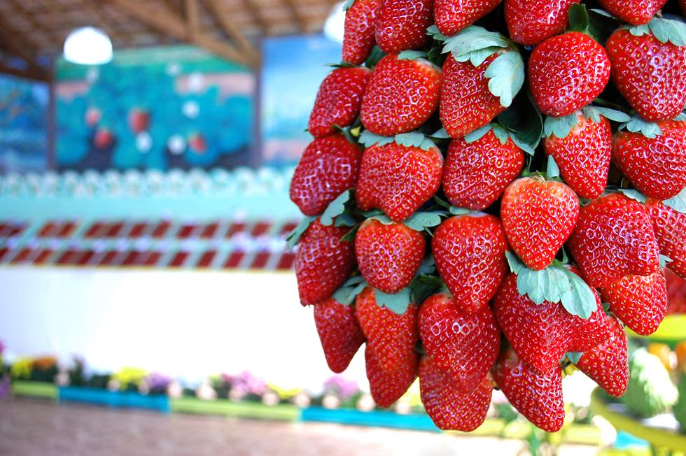 Festa do morango (Foto: Divulgação)