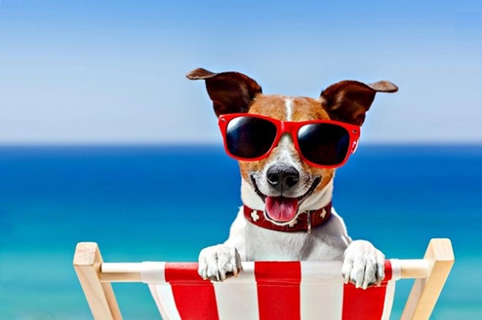 Parque de diversões para pets oferece praia artificial (Foto: Divulgação)