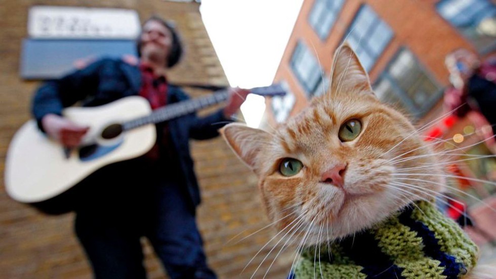 Um Gato de Rua Chamado Bob (Foto: Divulgação)