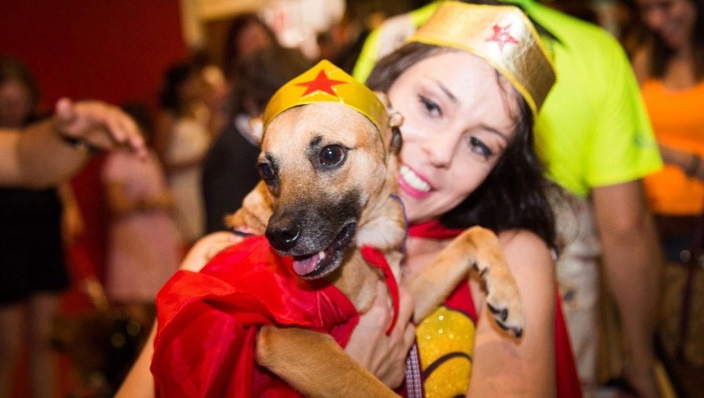 Desfile de cães (Foto: Divulgação)