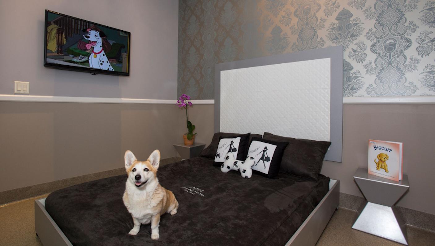 Posh Pet Hotel (Foto: Divulgação)